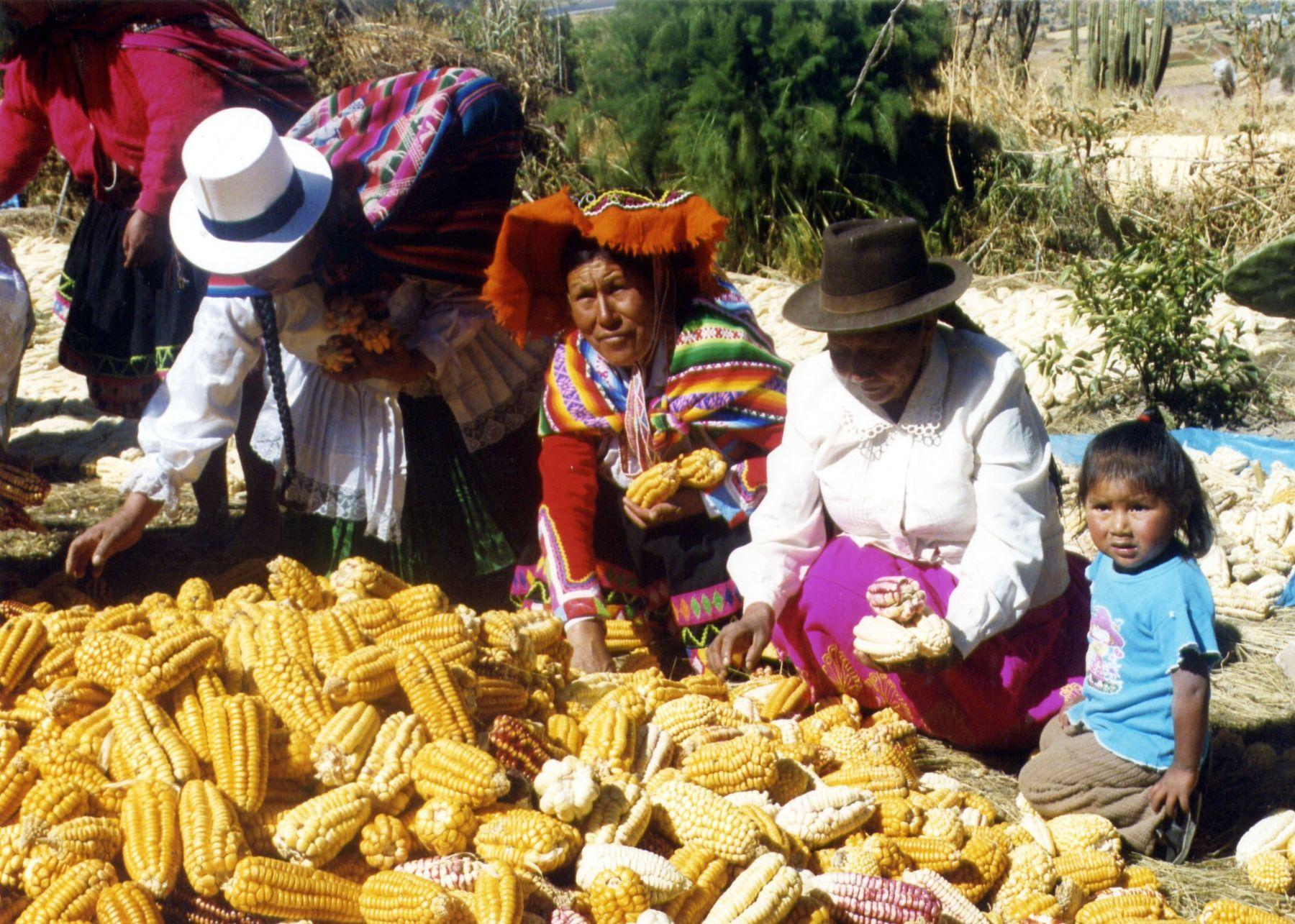 """POR TRES DÍAS CONSECUTIVOS SE DESARROLLARÁ EL CONGRESO INTERNACIONAL  EL """"ORIGEN Y EVOLUCIÓN DEL MAÍZ EN LOS ANDES"""""""